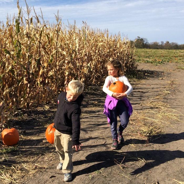 pumpkin lugging